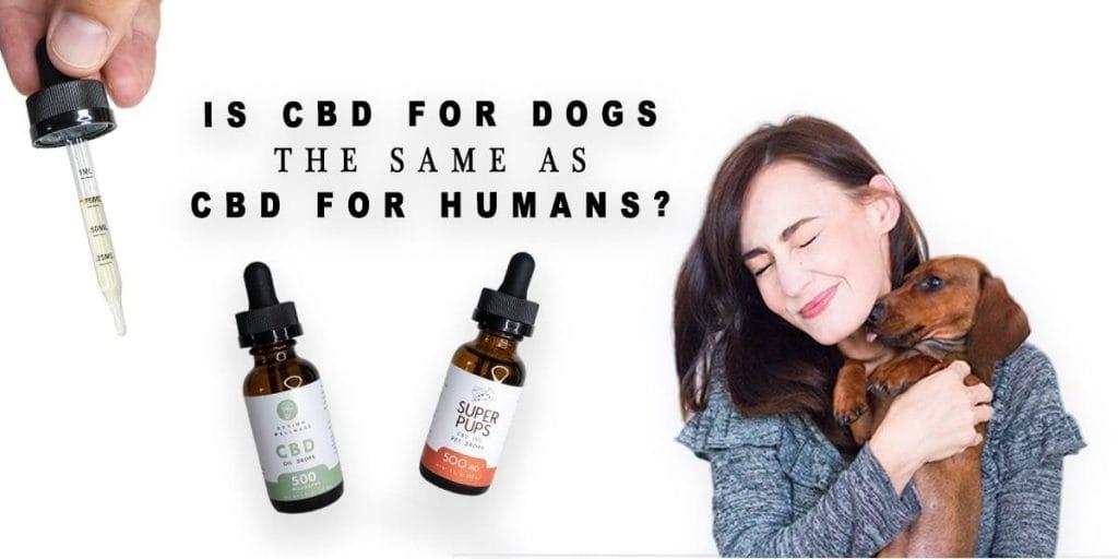 cbd pets